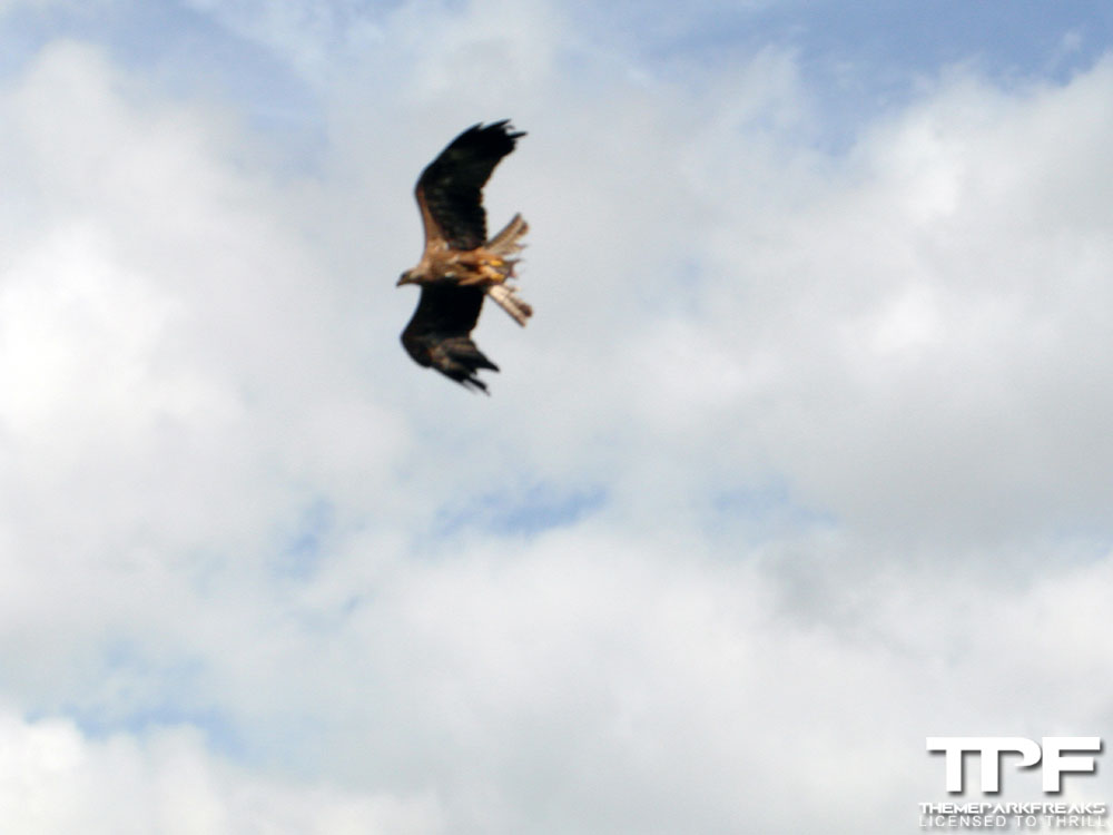 Bouwdewijn-Seapark-02-09-2012-(90)