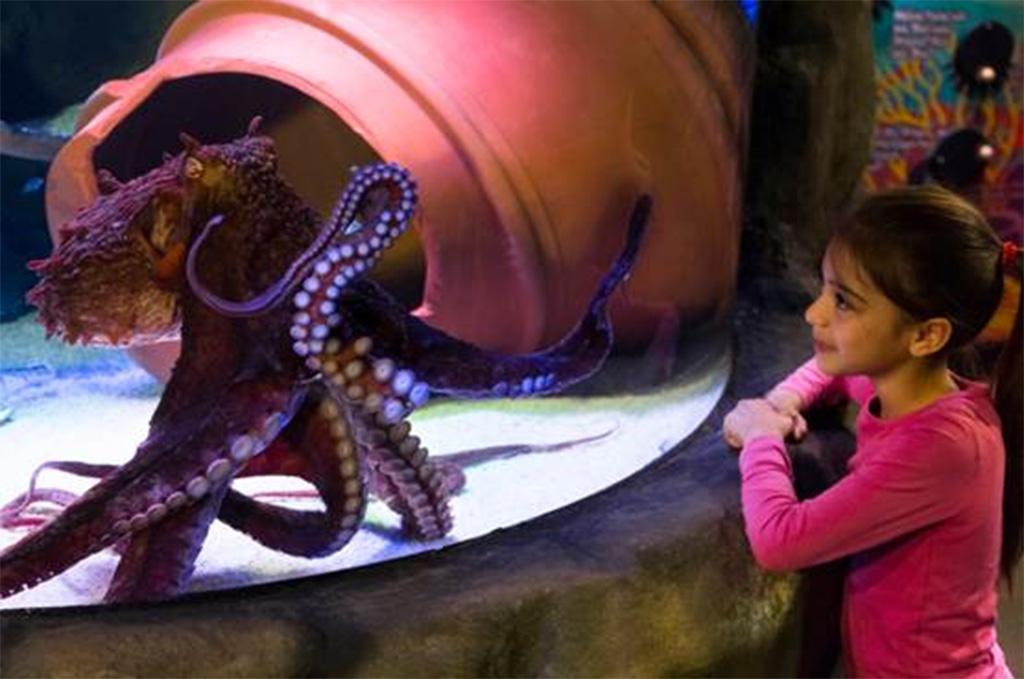 sea-life-oberhausen-oktopus
