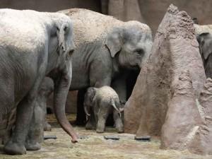 olifantje-geboren-930x699