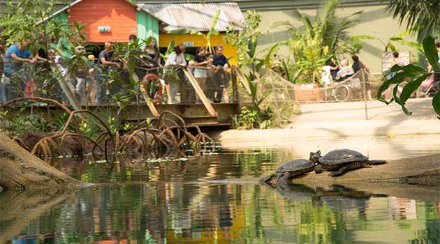stijgend bezoekersaantal bij burgers 39 zoo dankzij mangrove. Black Bedroom Furniture Sets. Home Design Ideas