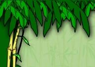 jungle bedrooms - decorating jungle bedrooms - rainforest ...