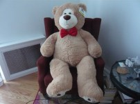 Mr. Bear from the Jungle during his tenure in my room.
