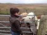 We found Shetland Ponies!!!