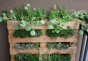 Add Space With Creative Vertical Gardens Part 2 The Micro Gardener