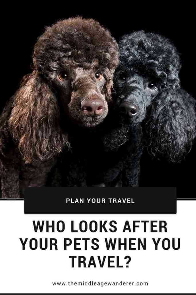 Who looks after your pets while you travel? Making sure your pets are safe while you are aware means you will have peace of mind while travelling. #travel #pets