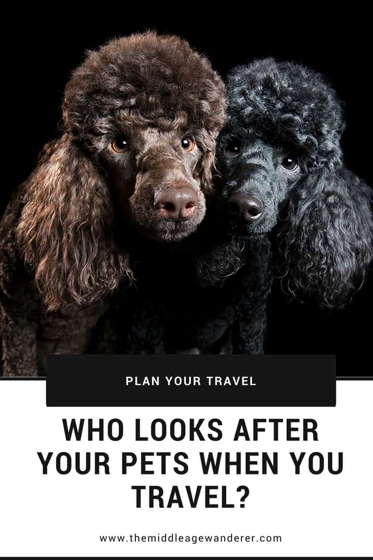 Who looks after your pets while you travel? Making sure your pets are safe while you are aware means you will have peaee of mind while travelling.  #travel #pets