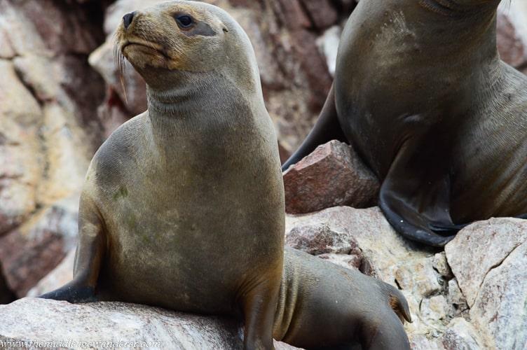 Ballestas Islands, Peru