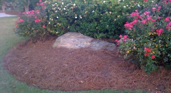 renewing landscape midlife