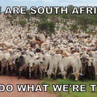 south africa apathy masses herd rape cyril ramaphosa piet bergh eleanore spies mmusi maimane