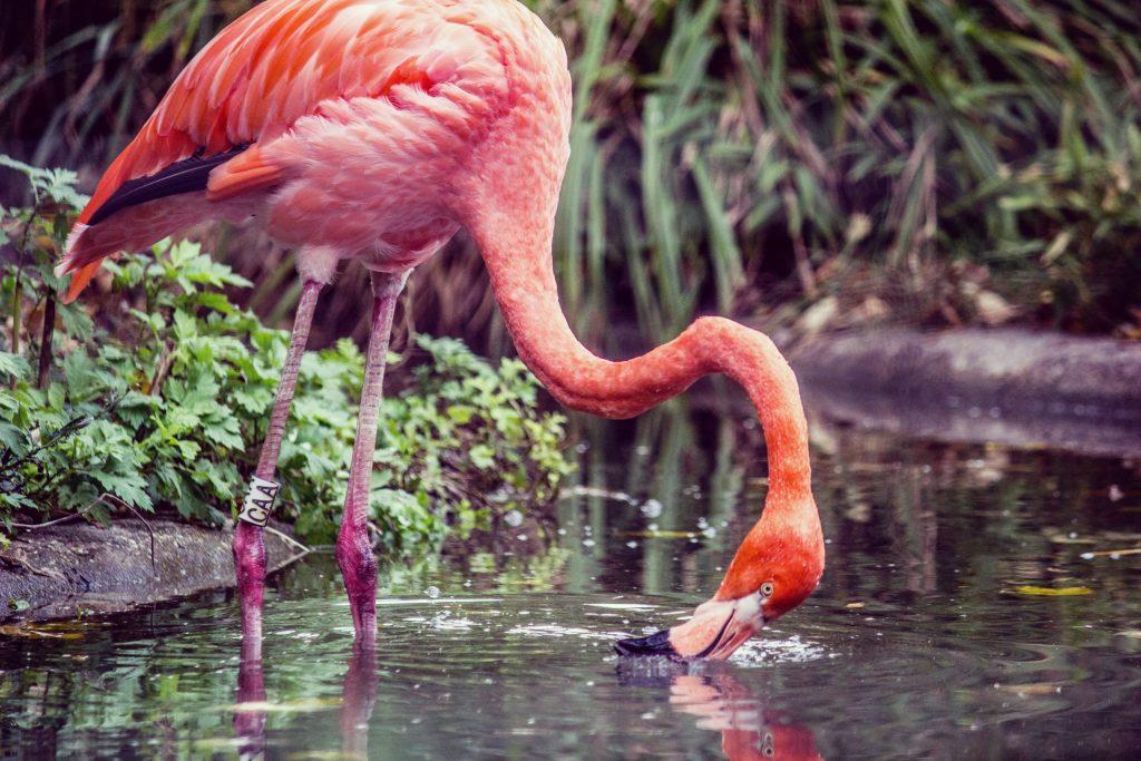 Pink Flamingos in Milan