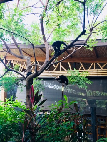 breakfast with monkeys andaz Costa Rica review