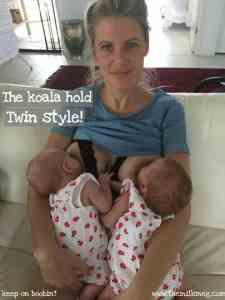 Koala hold twins