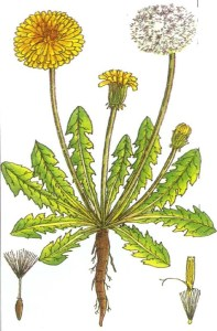 Hedge Herbs image