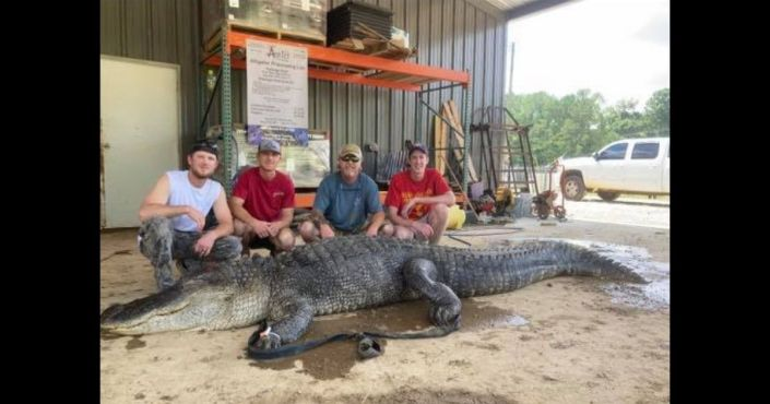Artifacts Believed to Be Thousands of Years Old Discovered Inside Massive 750-Pound Alligator