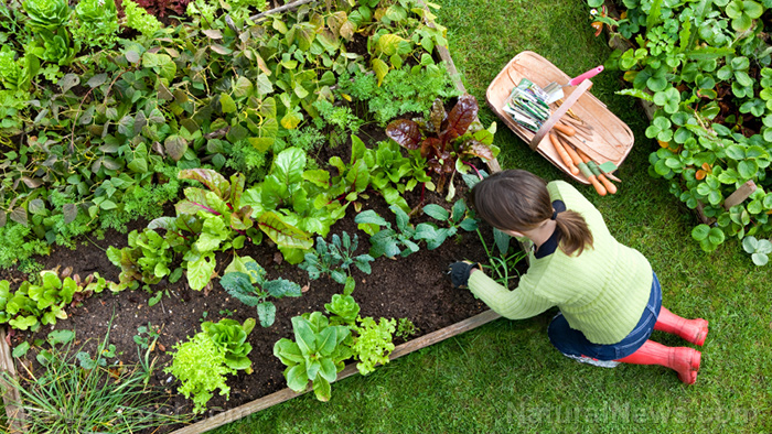 Weed-free, worry-free: 5 Ways to get rid of weeds in your home garden