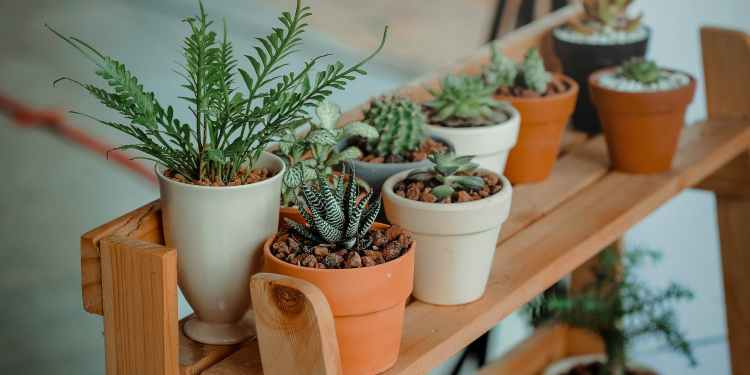 green indoor potted plant lot
