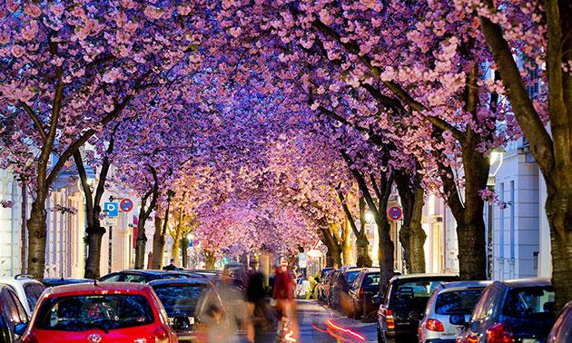 Street-Bonn-Germany