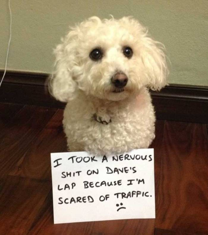 25 Guilty Dogs Who Deserve To Be Shamed Publicly