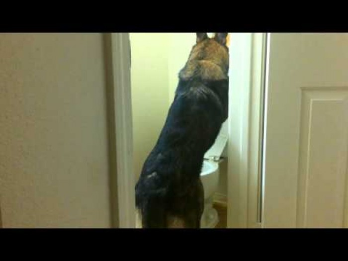 This Dog Might Have Better Bathroom Manners Than Every Man You've Ever Met.