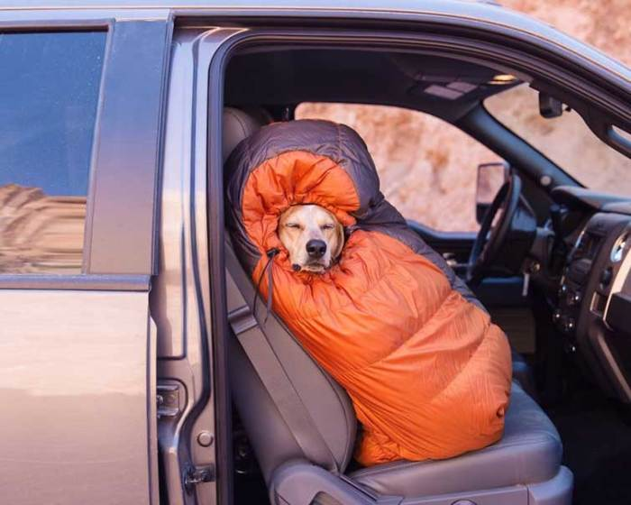 Photographer Shows Just Why Dog is Man's Best Friend