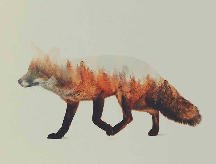 Double-Exposure Animal Portraits By Norwegian Photographer