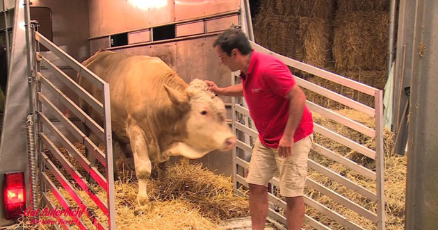 This Bull Was Chained His Whole Life. Now Watch His Reaction To The Man In Red
