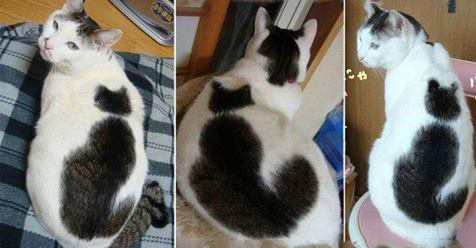 11 Cats That Got Famous For Their Awesome Fur Markings