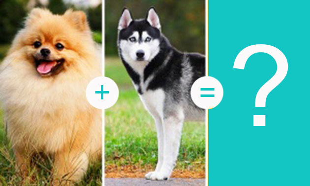 14 indescribably cute dog breeds you'll want to cuddle