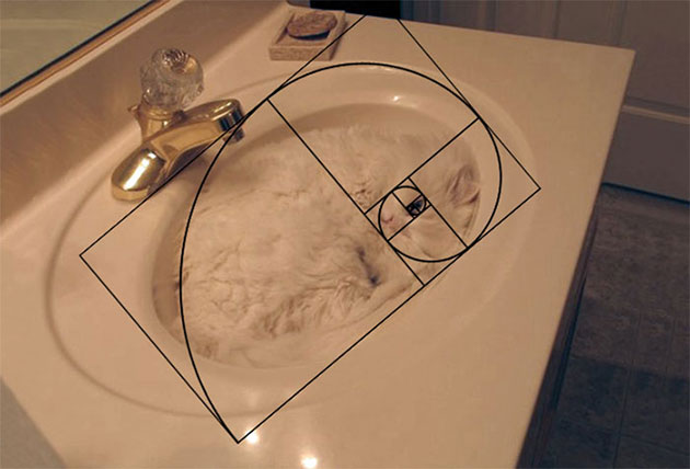 Furbonacci Sequence Proves That Cats Are Purrfect