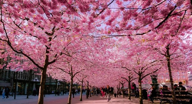 16 of the Most Beautiful Spring Alleys From Around the World
