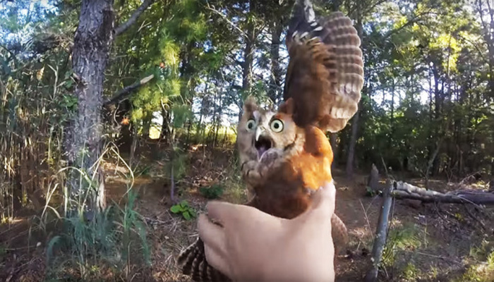 He Heard Screaming In The Woods And Knew That This Tiny Animal Needed Help