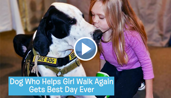 Dog Who Helps Little Girl Walk Again Gets Best Day Ever