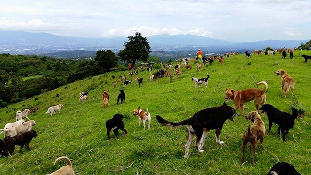 Any Animal Would Love Living In This Adorable Paradise For Stray Dogs