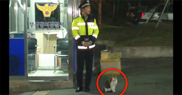 This Homeless Cat Walked Up To A Police Officer… And The Most Wonderful Thing Happened.