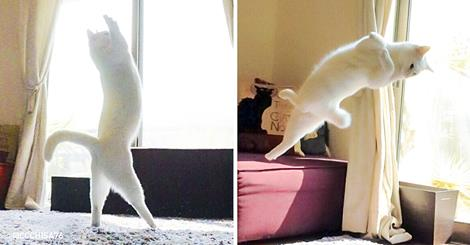 This Cat Dances Like A Ballerina When No One Is Looking