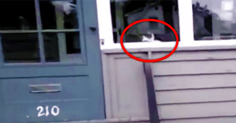 They Didn't Believe The Mailman That This Cat Does THIS Every Day… So He Caught It On Camera!