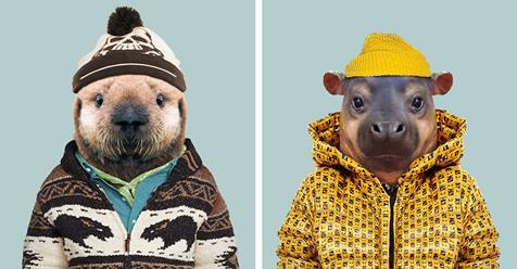 Incredibly Cute Portraits of Baby Animals Dressed Like Humans