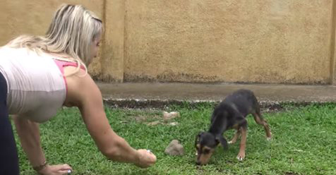 Stray Dogs Are Everywhere, Even In A Paradise Like The Costa Rican Jungle…