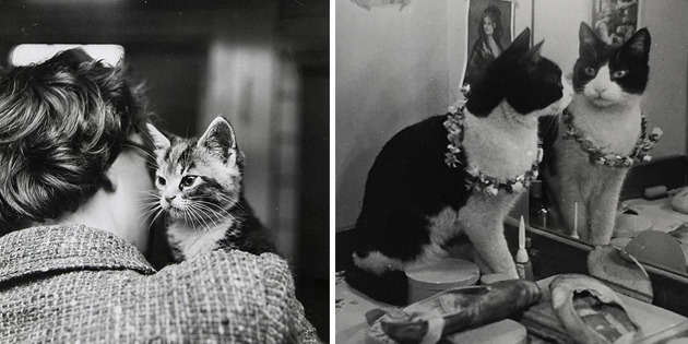 Thurston Hopkins – Cats of London in the 1950s