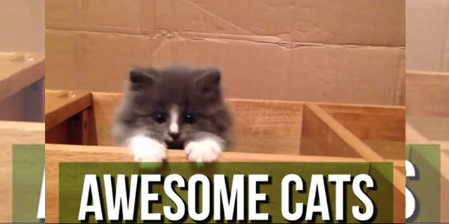 This Compilation Of Awesome Cats Just Proves Why They OWN The Internet!