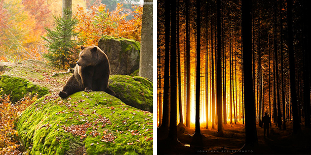 12 Photos That Will Convince You That Bavaria Has the Most Magical Forests in the World