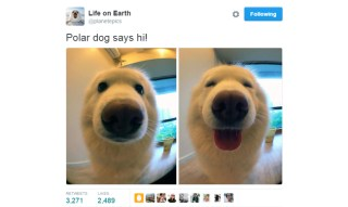 Here Are Life On Earth's Best Tweets