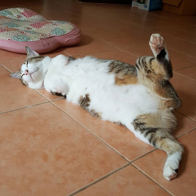 able two legged cat