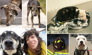 30 Animal Stories That Restored Our Faith In Humanity In 2016