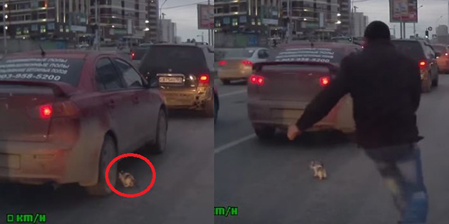 Man Runs to Save Kitten, Who Escaped Certain Death