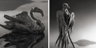 Africa's Lake Natron Turns Animals Into Stone