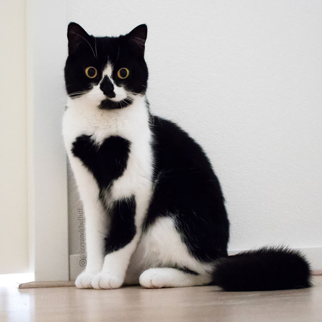 cute-cat-heart-on-chest