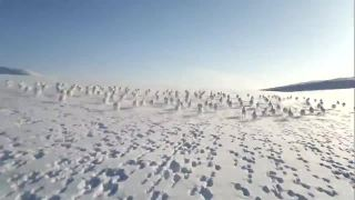 Massive Herd Of Wild Rabbits Cross Snowmobile's Path