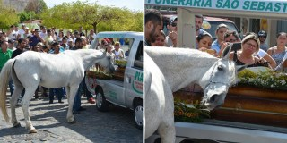 The heart-breaking moment a horse bid farewell to his best friend during the funeral