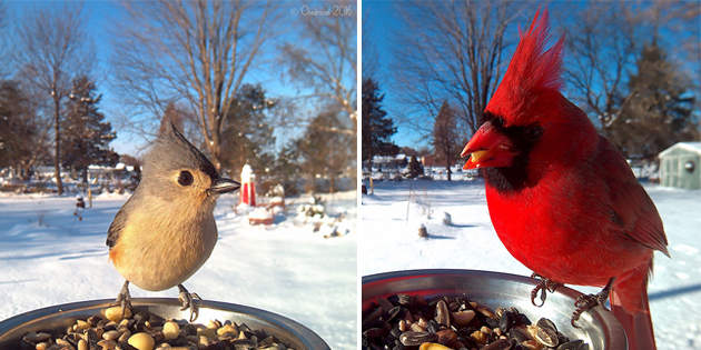 Woman Sets Up Bird Feeder Photo Booth to Capture Close-Ups of Feathered Friends